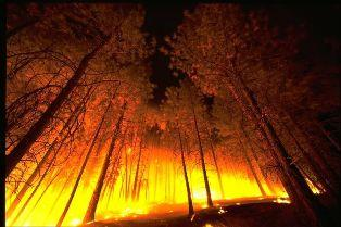 Wildfire in a Forest