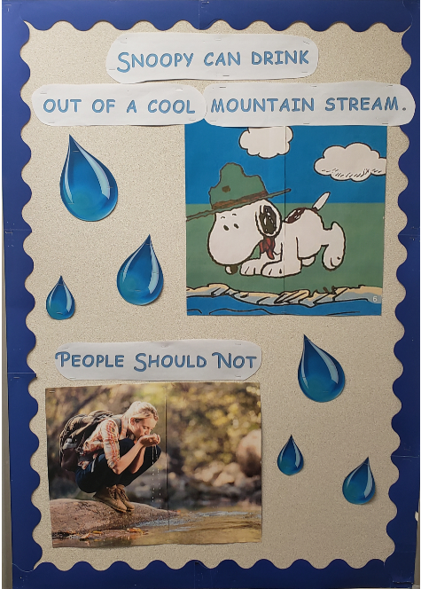 """Snoopy can drink out of a cool mountain stream."" Showing Snoopy drinking water. ""People sh"